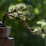 Designing Bonsai
