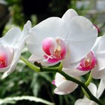 Orchids and Japanese Gardening