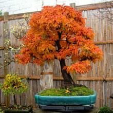 Autumn-Shishigashira-Craig-Coussins