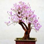 Feed that blooming bonsai!