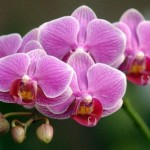 Orchids Listed