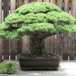 How to Determine an Effective Bonsai Soil