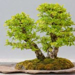 What is Penjing