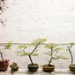Bonsai Society Survey