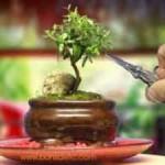 Beginner's Guide to Bonsai Gardening