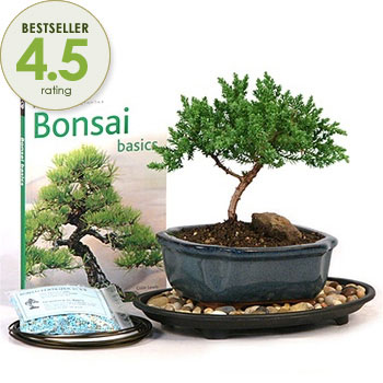 How to Choose the Right Bonsai for a Unique Stag Do Gift