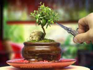 Beginner's Guide to Bonsai Gardening