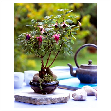 4 Essential Bonsai Care Tips for Beginners