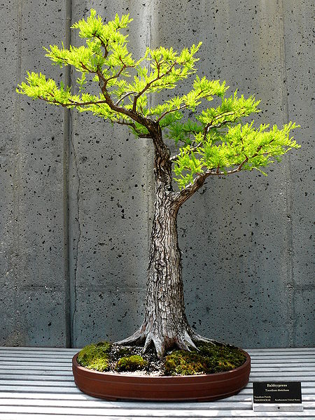 Inspiring Winter Bonsai