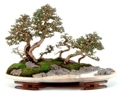 Penjing, Landscapes in Miniature