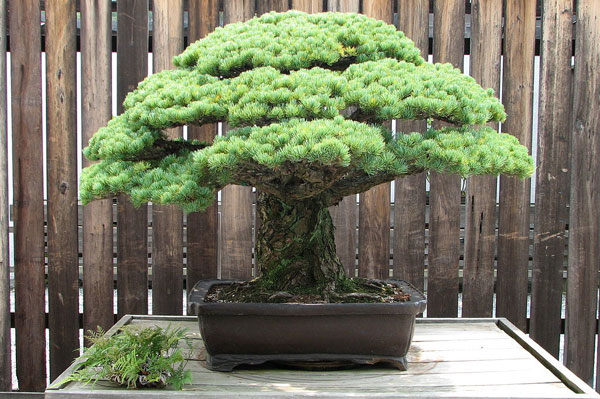 Great Bonsai, part one