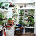 bonsai-shop-dublin