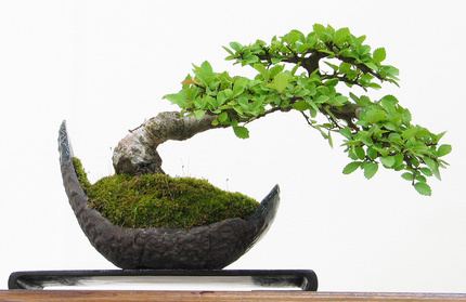 Bonsai knowledge for beginners