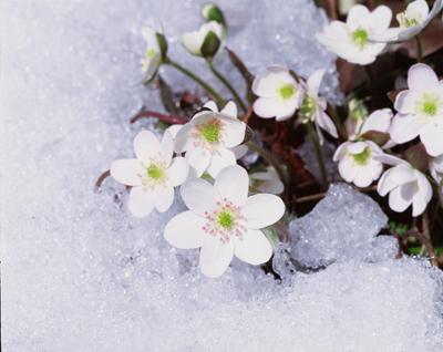 Thinking of Spring!