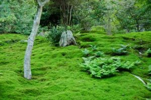moss-on-a-forest