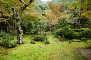 japanese-poets-on-bonsai
